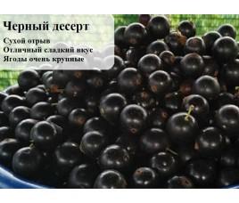 Купить новые сорта черной смородины с июля 2020 года