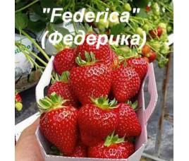 Федерика
