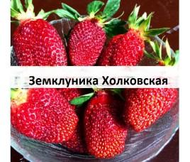 Земклуника Холковская - самая крупноплодная!